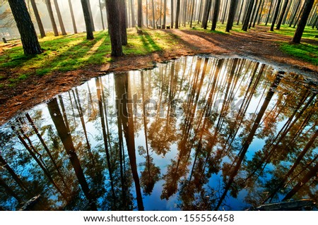 Forest in the morning with trees reflection in a puddle - stock photo