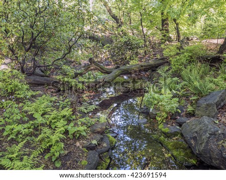 Forest in the Rambles of Central Park in the spring - stock photo