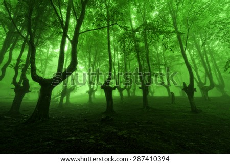 forest in the spring with green fog