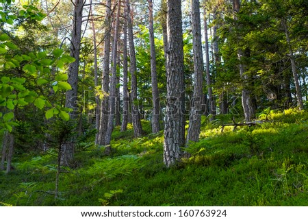 Forest in Vrata Valley in Slovenia