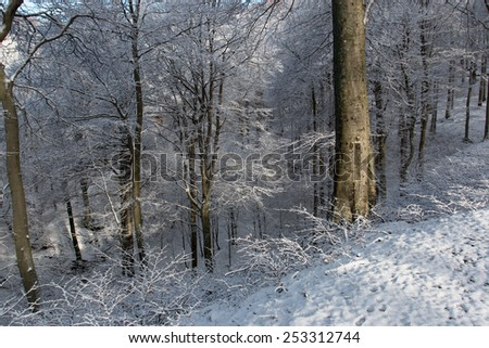 forest in winter, Mount Generoso