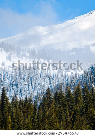 Forest Infront of Mount Rainier National Park - stock photo