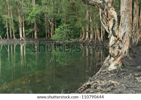 Forest lake reflecting trees in Hong Kong - stock photo