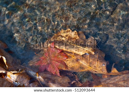 Forest Lake, the cold water, the first ice autumn leaves in the water