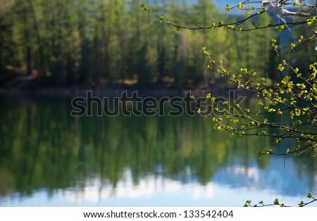 Forest lake, wild summer landscape - stock photo