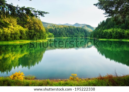 Forest lake with reflection - stock photo