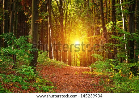 Forest landscape - stock photo