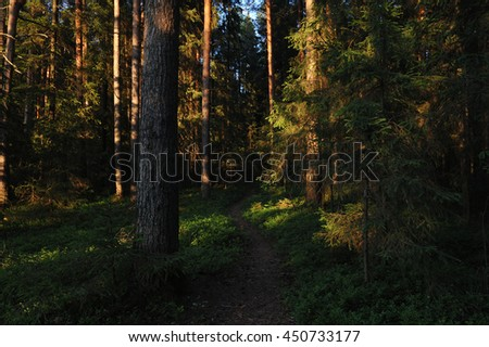 Forest landscape at evening sun.