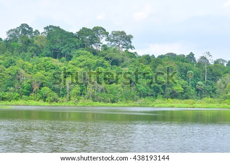 Forest landscape at Khao Yai national park, Thailand - stock photo