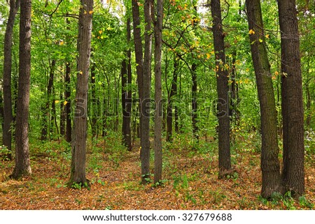 Forest landscape. Fall in the oak tree forest. Green and yellow leaf falling