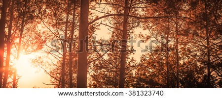 Forest landscape in fall, panoramic cut in Insta style processing - stock photo