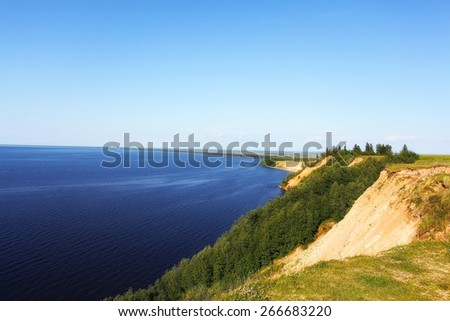forest landscape in summer europe pine