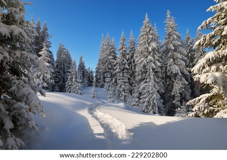 Forest landscape in the winter. The trail in the snow. Christmas view - stock photo