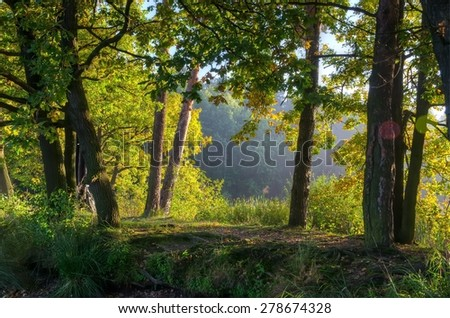 Forest landscape. Narrow path runs among the trees.