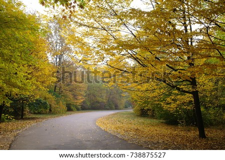 Forest landscape. Road in the park, autumn, trees, yellow leaves. Sunny day.