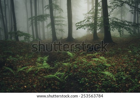 forest landscape with green plants - stock photo