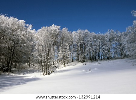 Forest landscape with sun and shadows and deep blue, winter sky - stock photo