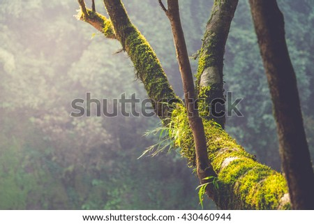 Forest landscape with trunk mossy and old tree, Khao Yai National Park, Thailand - stock photo