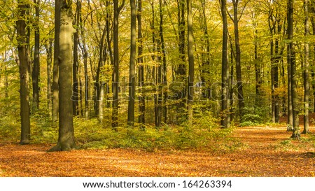 Forest lane in autumn colors - stock photo