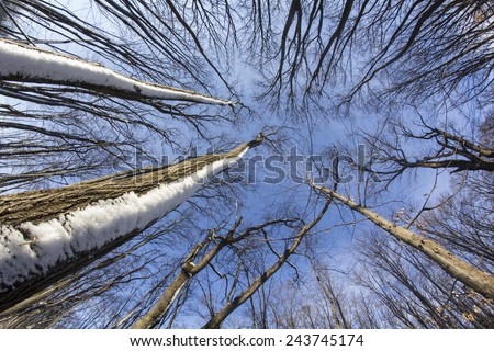 Forest - low angle shot in winter with fish eye lens - stock photo