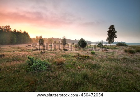 forest meadow by lake in misty sunrise, Drenthe, Netherlands - stock photo