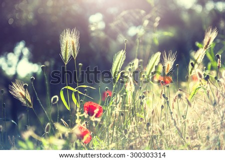 Forest meadow with wild flowers and herbs. Selective focus. Beautiful summer landscape, vintage filter - stock photo