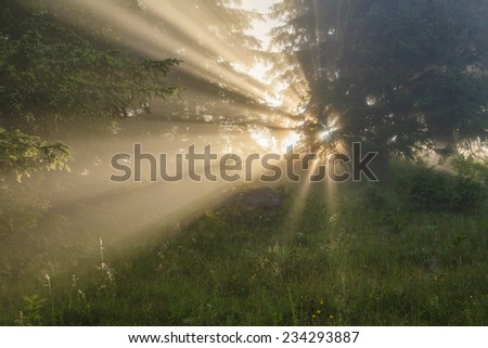 Forest misty landscape with sun rays through the trees