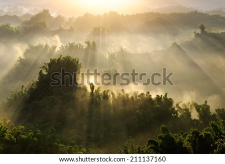 Forest morning with golden sunlight in countryside in Taiwan, Asia. - stock photo