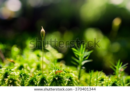 Forest moss - stock photo