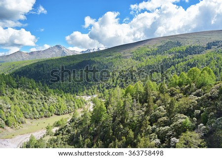 forest mountain and snow mountain  - stock photo