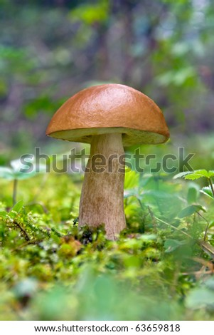 Forest mushroom - stock photo