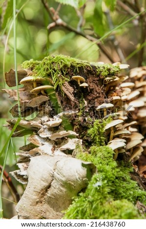 Forest mushroom in moss  - stock photo