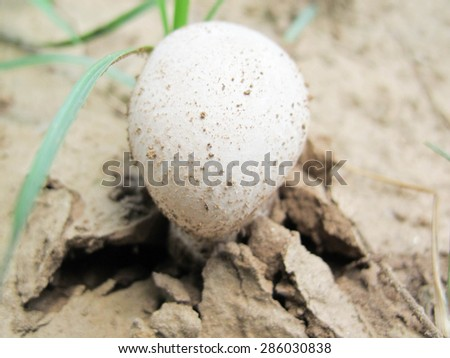 Forest mushroom in the grass  - stock photo