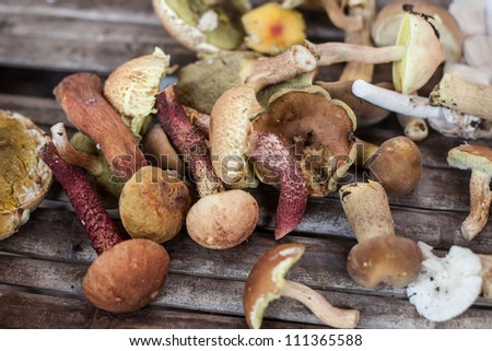 forest mushrooms in Thai street market - stock photo
