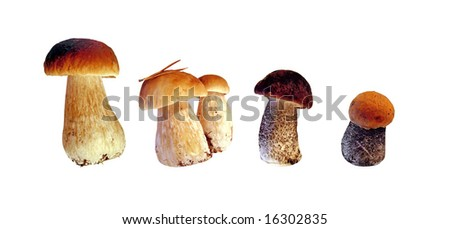 Forest mushrooms isolated on white background