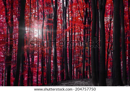 Forest National Park in Germany - stock photo