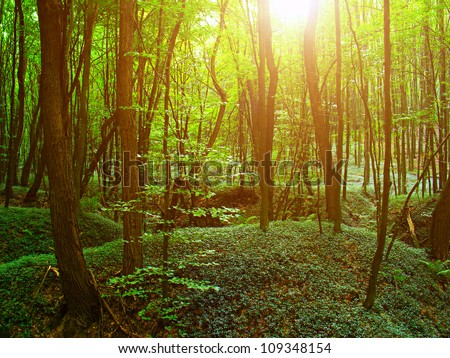 Forest. Nature green wood sunlight. - stock photo