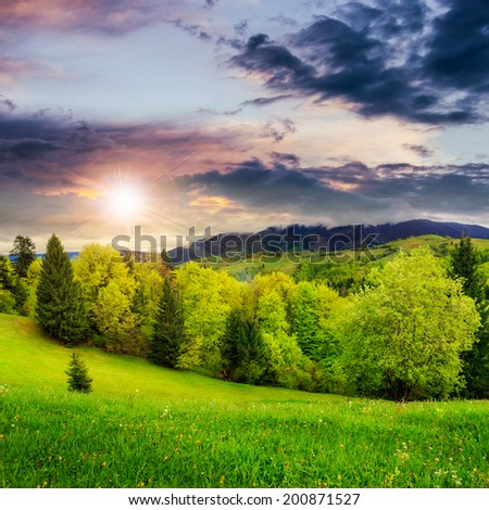 forest near meadow in mountain summer landscape at sunset