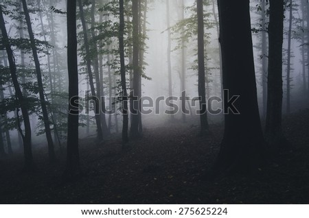 forest night scene - stock photo