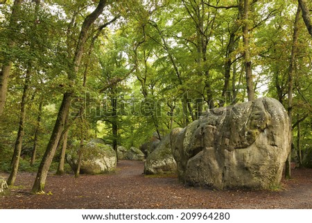 Forest of Fontainebleau, Seine-et-marne, Ile de France, France - stock photo