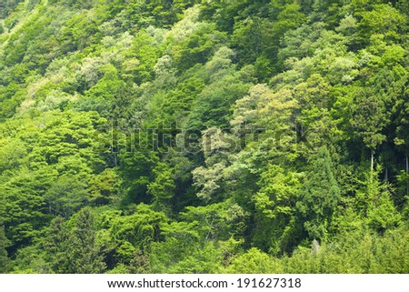 Forest of fresh green