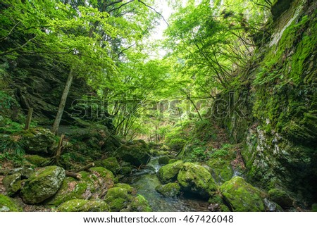 Forest of Japan