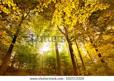 Forest on a sunny day. Landscape. - stock photo