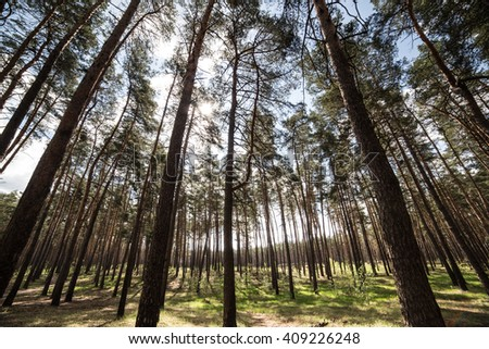 Forest on sky background - stock photo