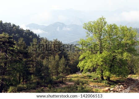 Forest on the slope of mount Tahtali, Turkey
