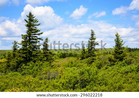 Forest Overlook at High Allegheny - stock photo