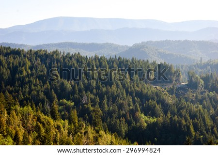 Forest Overlook at Redwood National Park - stock photo