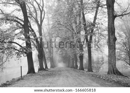 Forest park with a broad walk path in black and white - stock photo