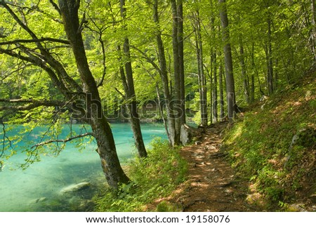 Forest path by a beautiful lake with clear water
