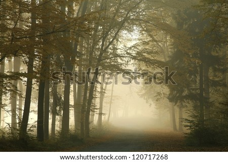 Forest path in a foggy October's morning. - stock photo